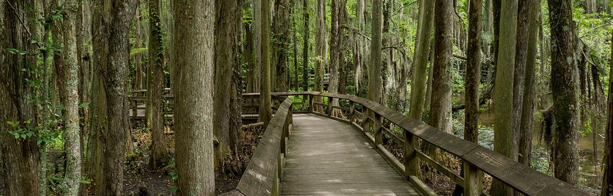 Shady Cypress Boardwalk at Swan Lake Iris Gardens